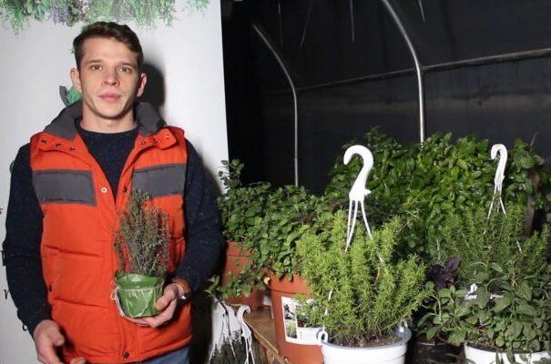 Studenţii ieşeni pornesc afaceri inovative cu plante aromatice